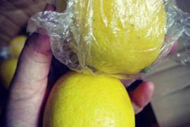 开工在即、柠檬已到货